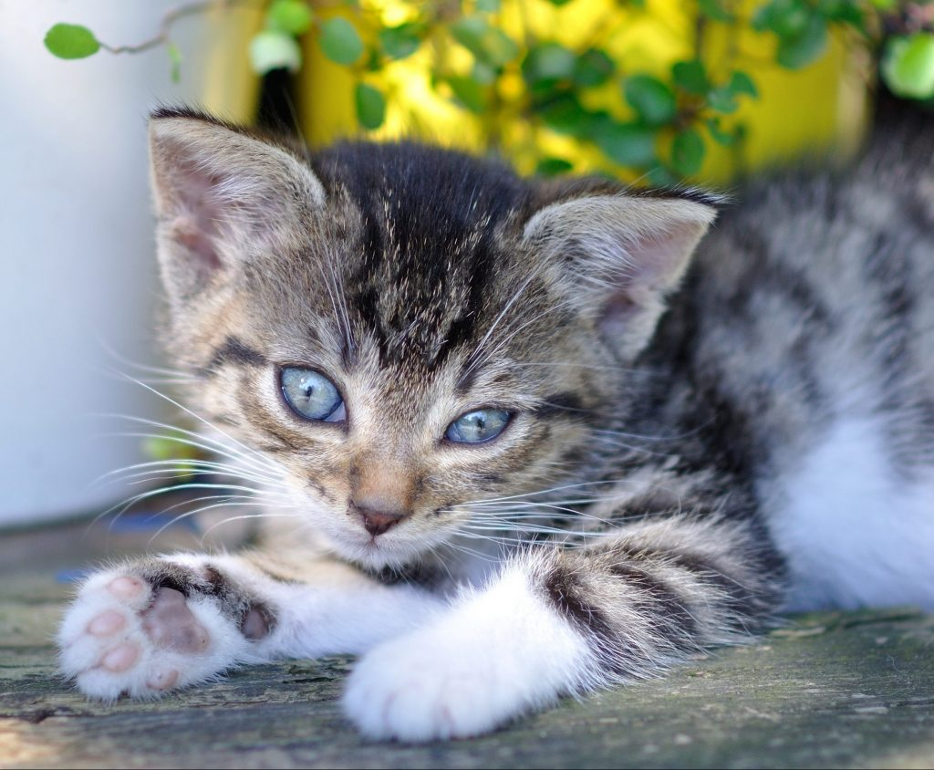 Tierarzt Ahaus Katze